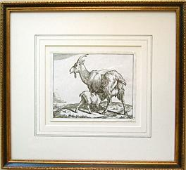 Marcus De Bye goat etching after Paulus Potter